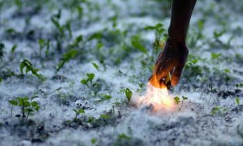 В Нижнем Тагиле из-за тополиного пуха участились пожары