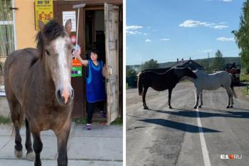 В посёлке под Нижним Тагилом лошади перекрыли дорогу и зашли в магазин (ВИДЕО)