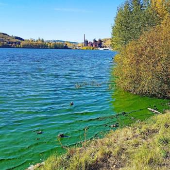 Тагильский пруд затянуло сине-зелёными водорослями