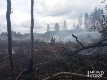 В Свердловской области за сутки в 2,5 раза выросла площадь лесных пожаров