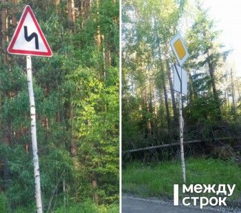 Чиновники ГГО додумались развесить знаки на берёзках вдоль «убитой» дороги (ФОТО)