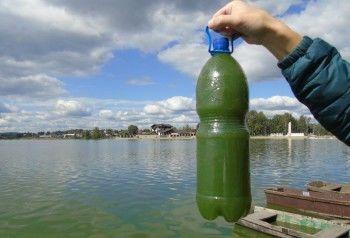 Роспотребнадзор проверит воду из вновь позеленевшего Черноисточинского пруда