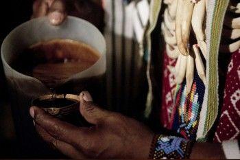 Жителя Нижнего Тагила осудили за контрабанду перуанского «шаманского» напитка