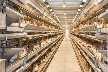 Жители свердловского села пожаловались Путину на незаконный куриный крематорий «Нижнетагильской птицефабрики». Предприятию грозит приостановление деятельности