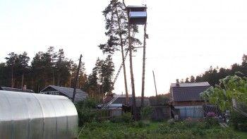 Жителя Нижнего Тагила оштрафовали на 100 рублей за дом на дереве