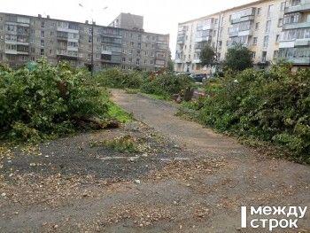 «За одно дерево судят, а сами 100 яблонь в один миг уничтожили». Жители многоквартирных домов на Вые возмущены «кровожадным» благоустройством двора