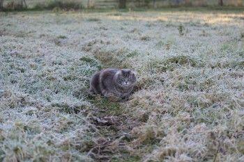 Заморозки и мокрый снег ожидаются на этой неделе в Свердловской области