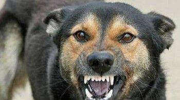 «Высаживали десант и чистили город». Более 10000 бездомных собак нужно отловить в Нижнем Тагиле