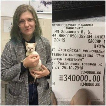 ВМайкопе студентка оплатила 340-тысячный долг приюта, чтобы они приняли бездомного котёнка