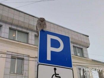 В Нижнем Тагиле сова «припарковалась» на дорожном знаке