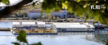 ФСБ возбудила административные дела против организаторов «китовой тюрьмы» в Приморье