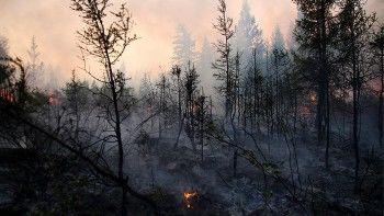 Природный пожар в Амурской области достиг второй очереди космодрома Восточный
