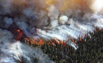 Из-за лесных пожаров МЧС ввело режим ЧС в трёх регионах Сибири