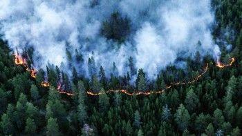 ВМЧС ответили красноярскому губернатору, заявившему, что тушить лесные пожары «вредно и бессмысленно»