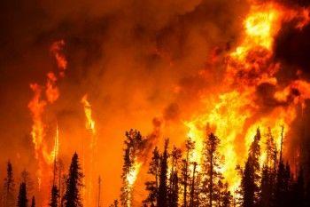 WWF: Из-за лесных пожаров Россия может остаться без тайги через 10 лет