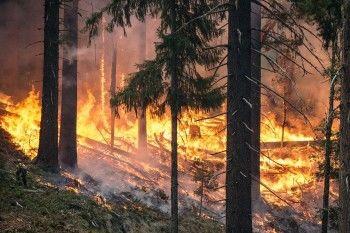 С начала года в Свердловской области произошло 256 лесных пожаров