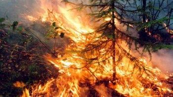 Эксперты предрекли глобальную экологическую катастрофу из-за лесных пожаров вСибири