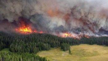 Счётная палата оценила ущерб от лесных пожаров в 2,4 миллиарда рублей