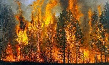 Greenpeace заявил об увеличении площади лесных пожаров в Сибири до 4 млн гектаров