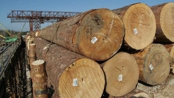 Глава Минприроды допустил введение запрета на экспорт леса в Китай из-за «чёрных лесорубов»