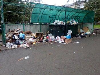 Жители Нижнего Тагила жалуются на невывоз мусора из контейнеров и крыс «размером с кошку»