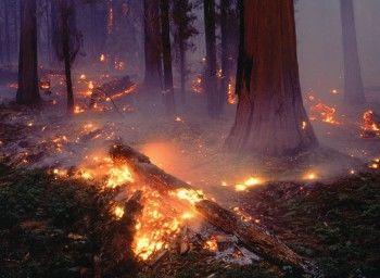 Рослесхоз оценил ущерб от лесных пожаров в 7 млрд рублей