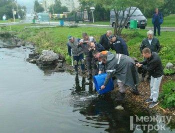 ЕВРАЗ выпустил в водоёмы Нижнего Тагила около 5 тысяч мальков белого амура