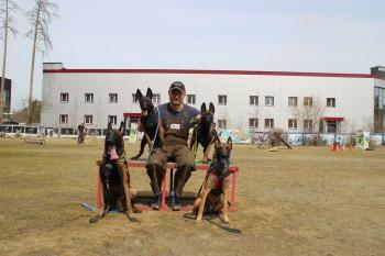 В Нижнем Тагиле появится большая площадка для тренировки собак