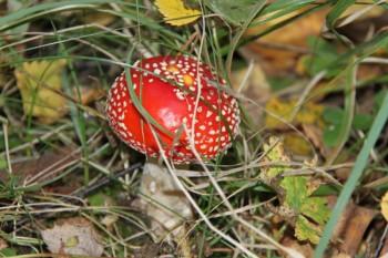 Тагильчанин умер от отравления ядовитыми грибами
