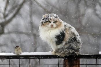 В Свердловской области объявлено экстренное предупреждение из-за мокрого снега, гололедицы и сильного ветра