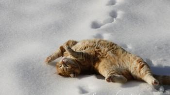 В выходные жителей Нижнего Тагила ожидает небольшое потепление и снег