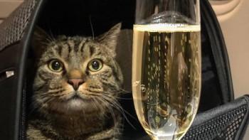 «Аэрофлот» исключил пассажира из бонусной программы из-за перевозки толстого кота