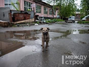 В 2019 году в Нижнем Тагиле было отловлено более тысячи бездомных собак