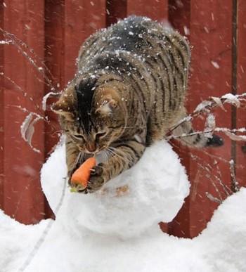 Последняя неделя ноября будет для жителей Нижнего Тагила тёплой и снежной