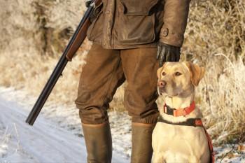 Под Нижним Тагилом охотники расстреляли двух собак. Хозяин животных ищет виновных