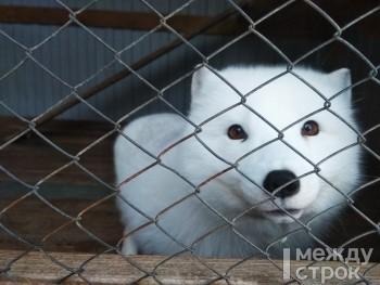 «Я их сейчас предаю». Под Нижним Тагилом контактный зоопарк GreenPoll закрывается и продаёт всех животных