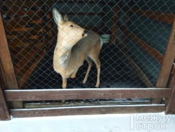 Жители Нижнего Тагила создали петицию в защиту зоопарка GreenPoll
