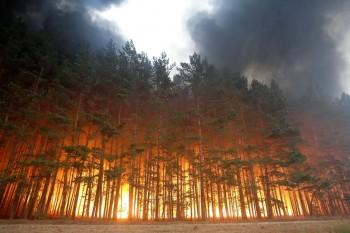 Минприроды предложило тушить все лесные пожары, вне зависимости от «экономической целесообразности»