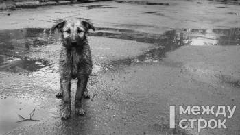 В Нижнем Тагиле могут создать муниципальную службу по отлову бродячих собак