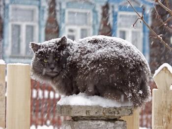 Синоптики обещают жителям Нижнего Тагила снежную рабочую неделю