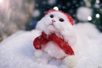 В новогоднюю ночь синоптики обещают жителям Нижнего Тагила минус 7 градусов и снег