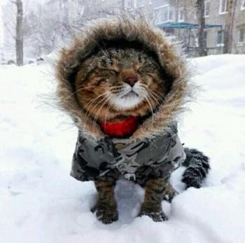 В выходные синоптики обещают жителям Нижнего Тагила снег и минус 7 градусов