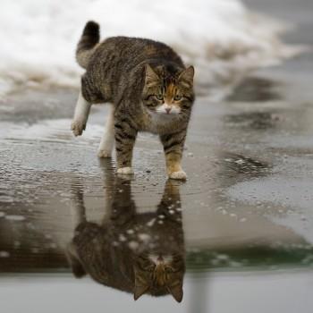 В последнюю неделю зимы жителей Нижнего Тагила ждут гололедица и плюс четыре градуса