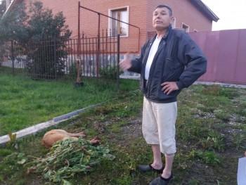 Зарубившего соседскую собаку на глазах у детей жителя Берёзовского приговорили к выплате штрафа