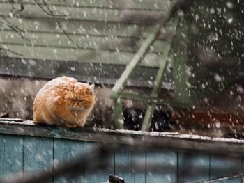 На этой рабочей неделе жителей Нижнего Тагила ждут дожди и снегопады