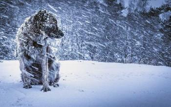 МЧС предупреждает жителей Нижнего Тагила о сильном снеге и гололедице