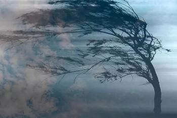 МЧС предупреждает жителей Нижнего Тагила о шквалистом ветре