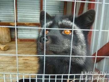 «Нам не выжить месяц». Зоопарки Нижнего Тагила просят помочь с кормом для животных