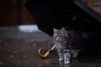 В Нижнем Тагиле начало недели будет дождливым