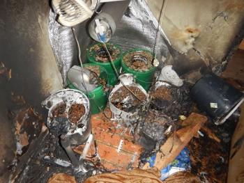 В Нижнем Тагиле из-за плантации конопли сгорела квартира